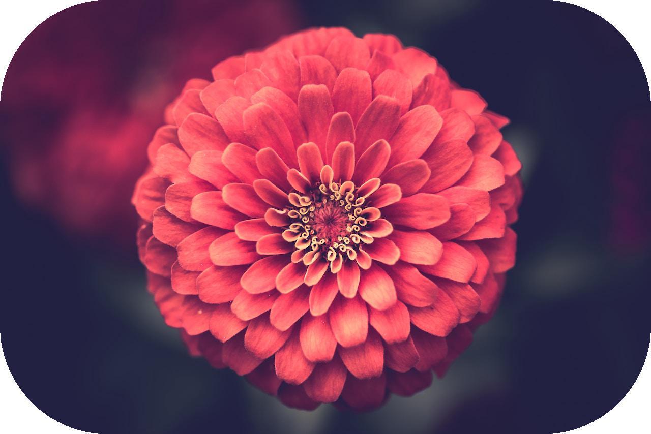 flower_r0.5.jpg
