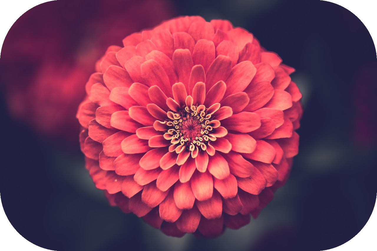flower_r0.5.png