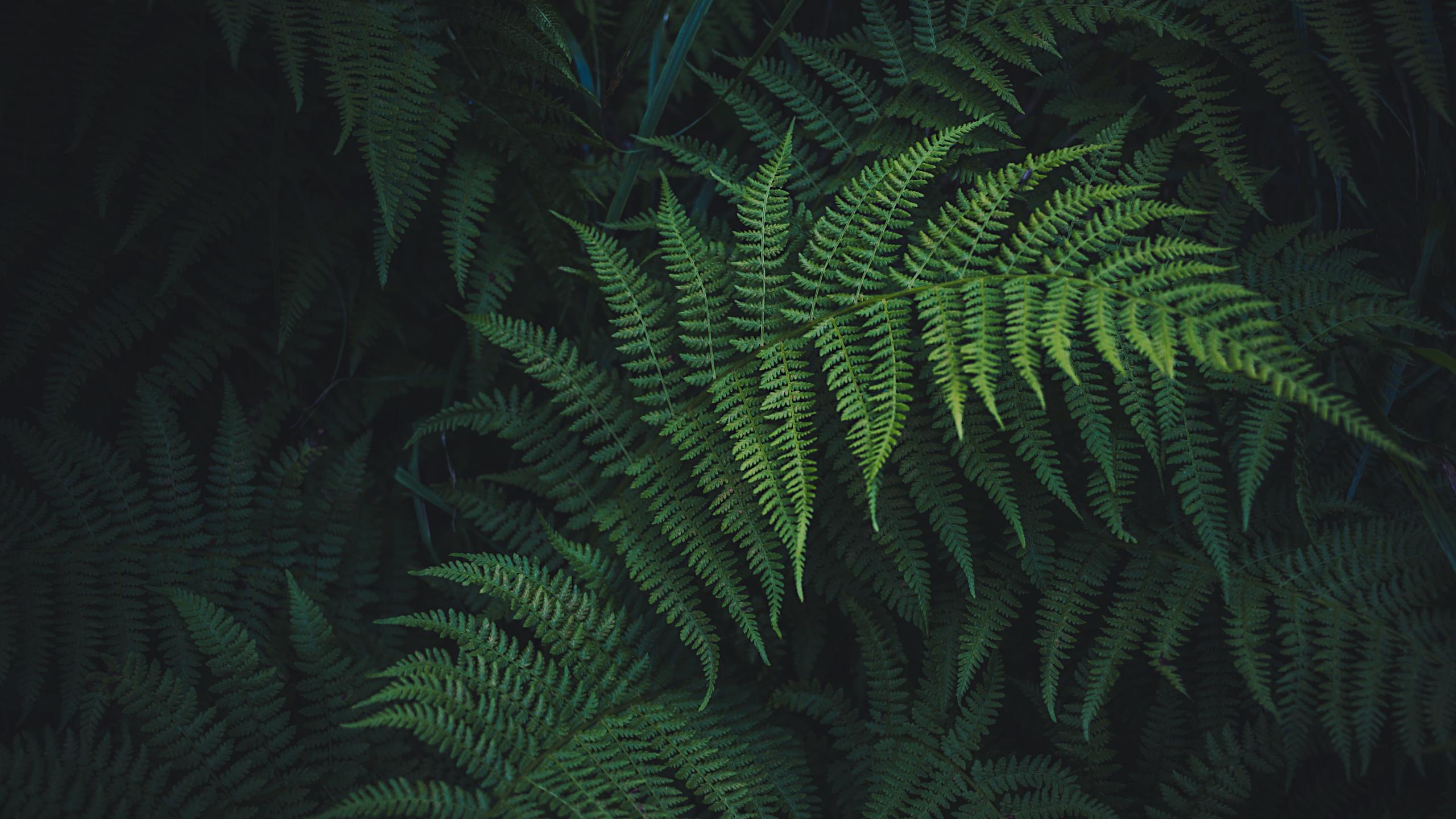 serenegreen.jpg