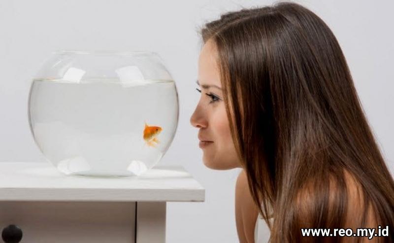 8b-menonton-ikan mas-497789606
