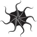 a kraken