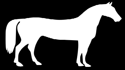 Pyhton Pillow alpha horse reverse