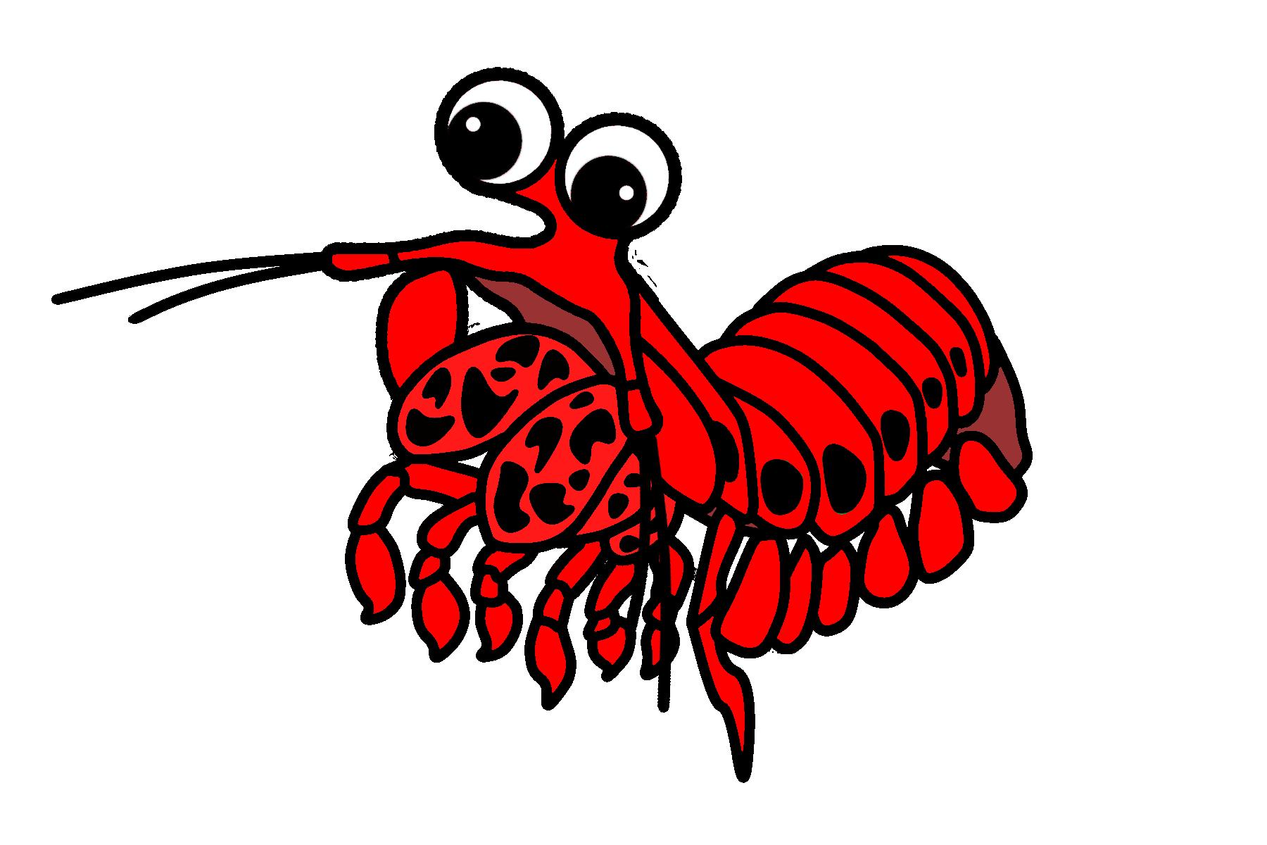 oratosquilla