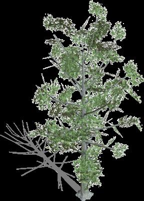 Webots documentation: Trees