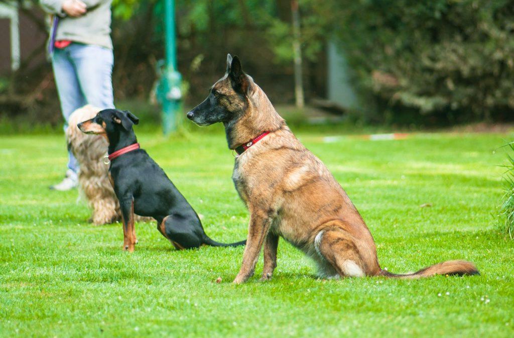 Tres perros sentados con la mirada al frente