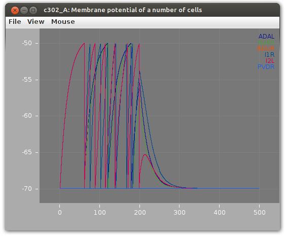 Simulation in jNeuroML