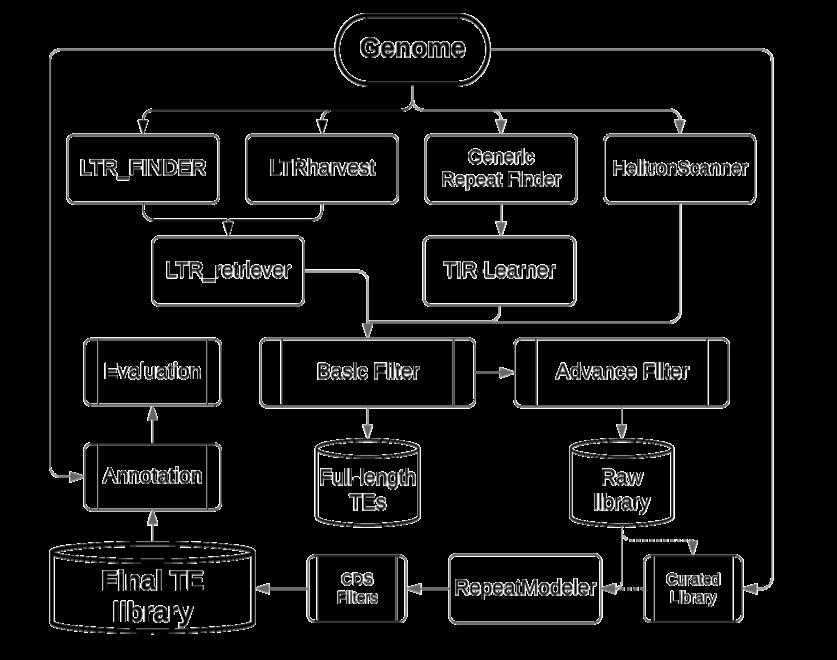 The EDTA workflow