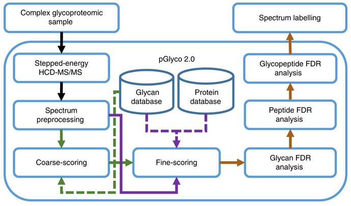 pGlyco2 workflow