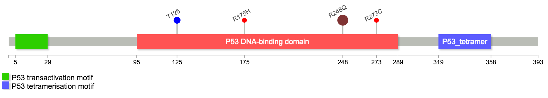 TP53 Lollipop diagram with 5 customized mutations