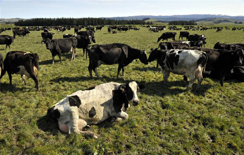 pastoral farming Pastoral farming is a core activity of the tuaropaki trust the 3,410 ha farm  produces beef and lamb, and milk from its dairy herd the trust also operates a  worm.