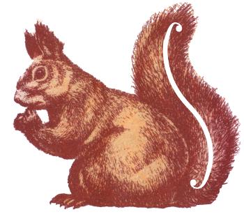 rodeint logo