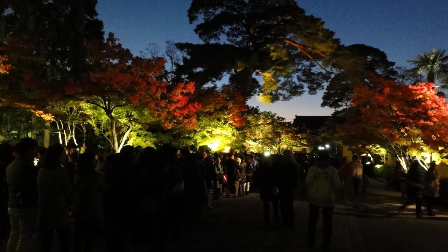 永觀堂夜間參觀的排隊人群