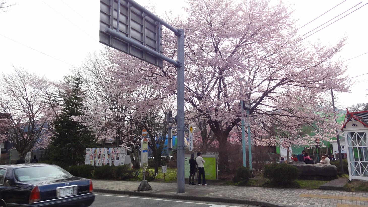 輕井澤街道的櫻花