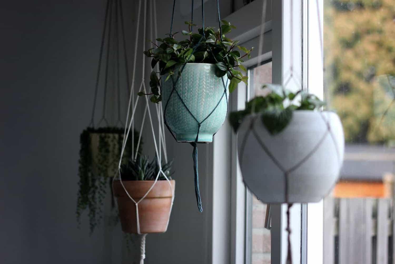 plante-suspendate