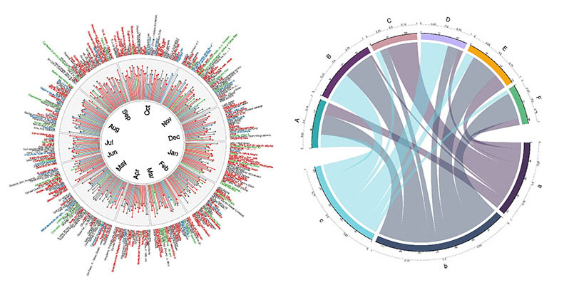 Circular Visualization in R