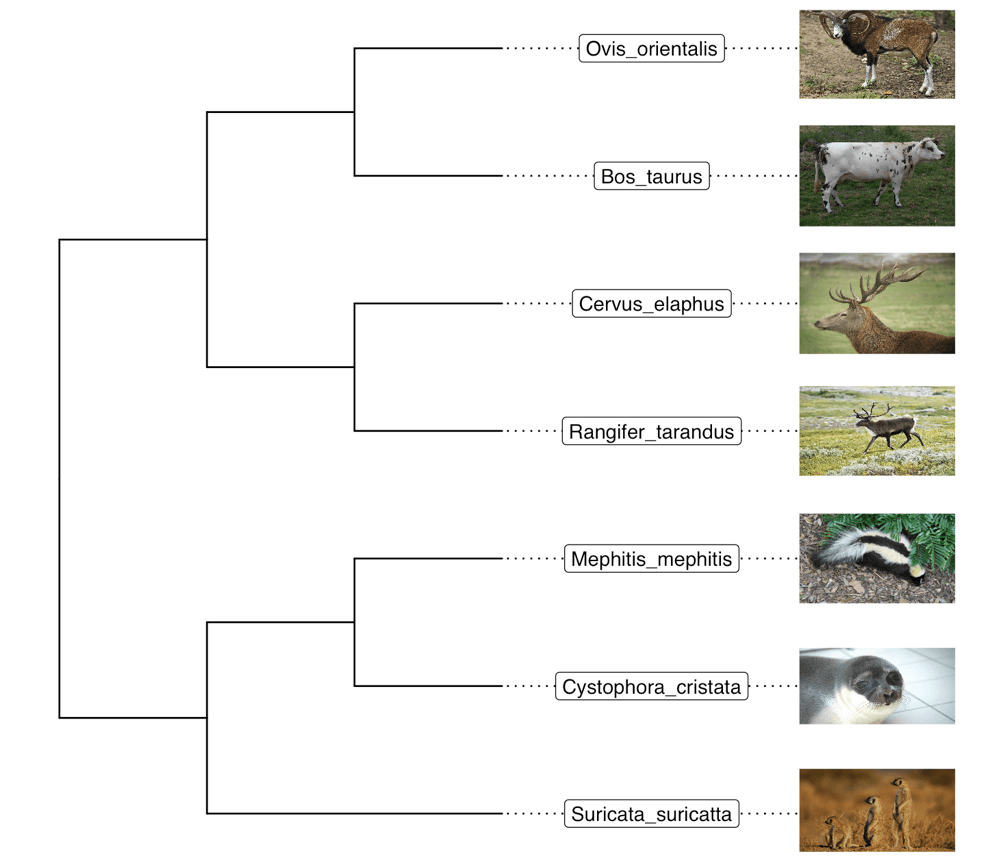 Annotating phylogenetic tree with images using ggtree and ggimage