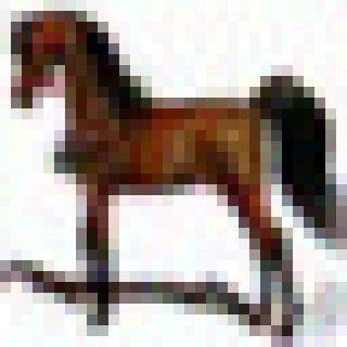horse_adversarial