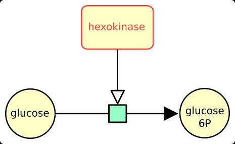 Macromolecule exampe real 1