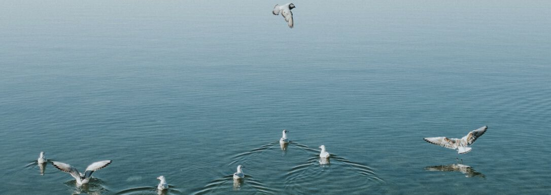 birds swimming on a lake