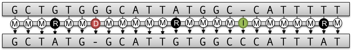 A transcript between two aligned sequences.