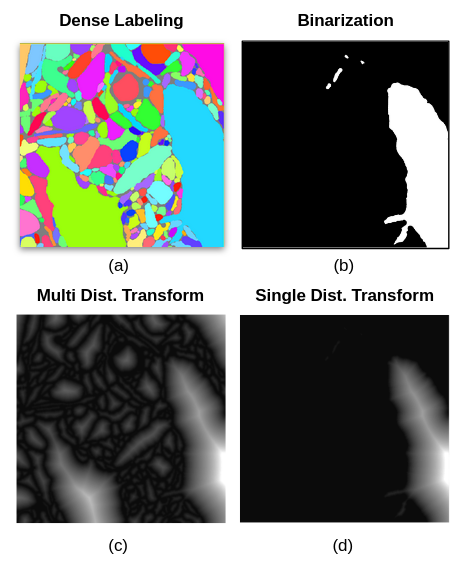 Fig. 2. Extracting the distance transform of a single label from dense segmentation. (a) a 2d slice of dense segmentation (b) extraction of a single label into a binary image (c) simultaneous distance transform of all labels in (a) (d) distance transform of (b) which can be achieved by direct distance transform of (b) or by the multiplication of (b) with (c).