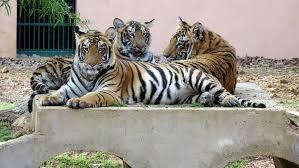 4. Kanan Pendari zoo