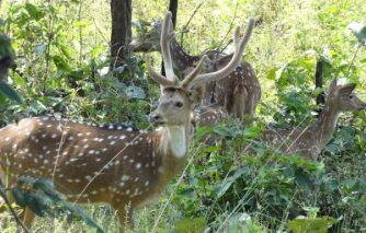 1. Indravati National Park