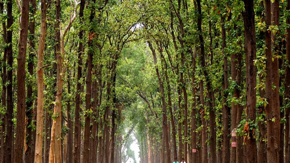 4. Kushmi Forest
