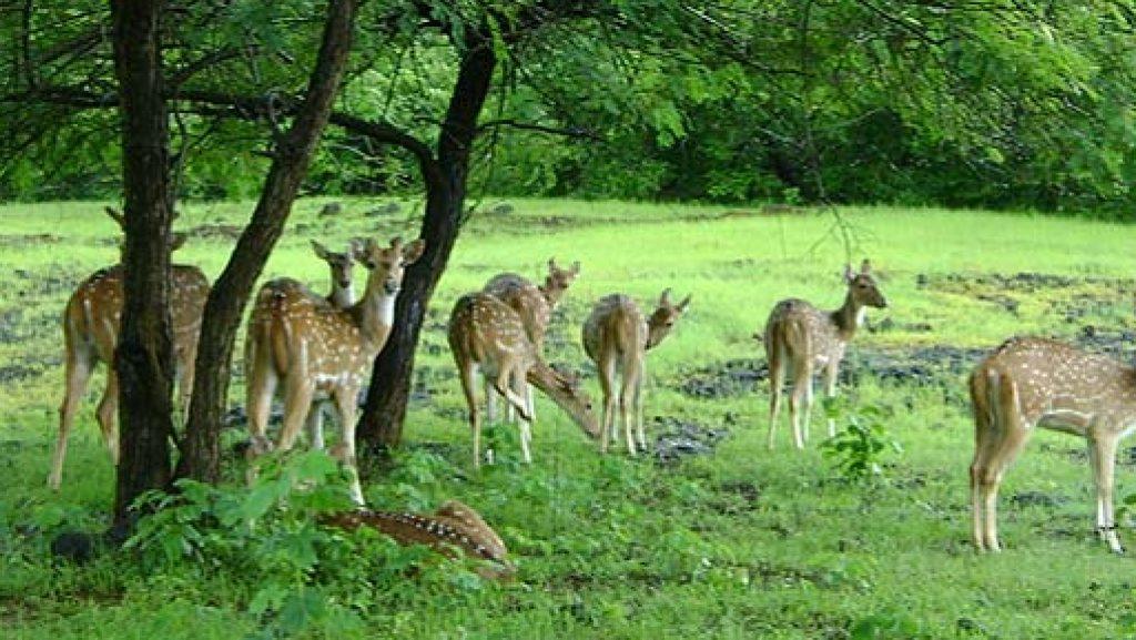 6. Bar Navapara Wildlife Sanctuary