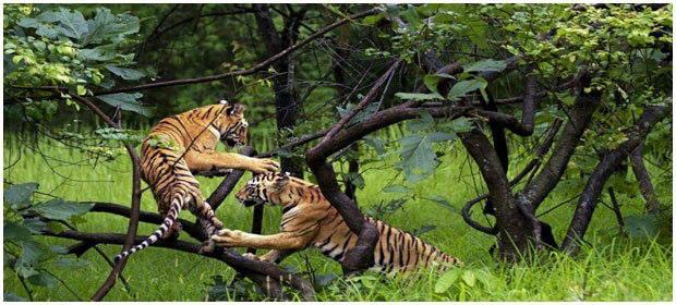 4. Suhelwa wildlife sanctuary