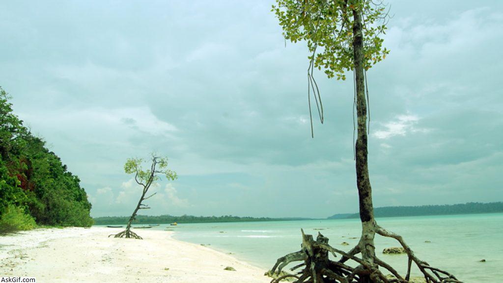 2. Swaraj Dweep (Radha Nagar Beach)