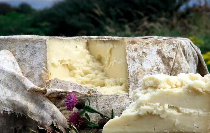 выращивание сыра