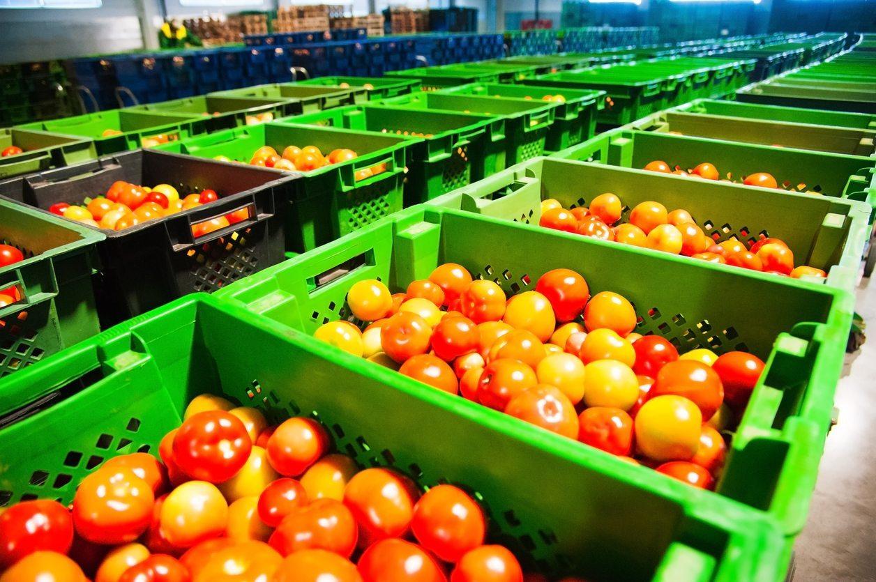 Камера дозаривания томатов