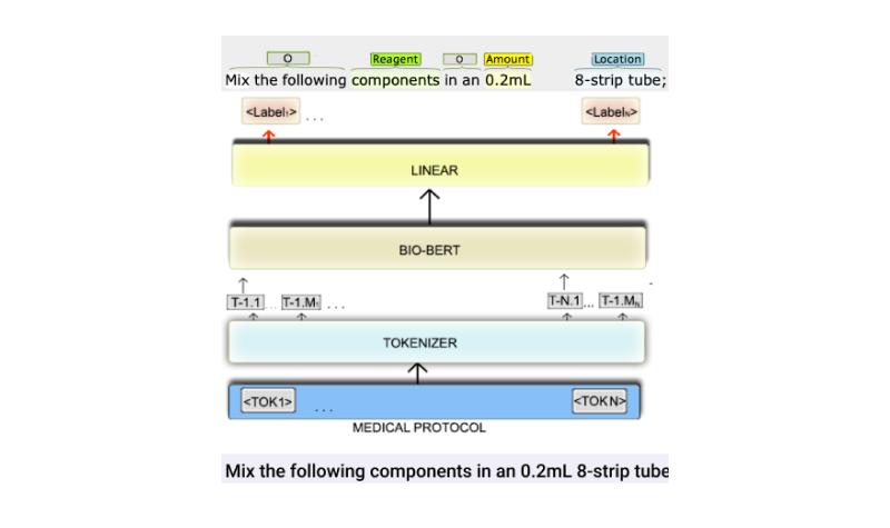 <b>NER Tagging of Lab protocols</b>