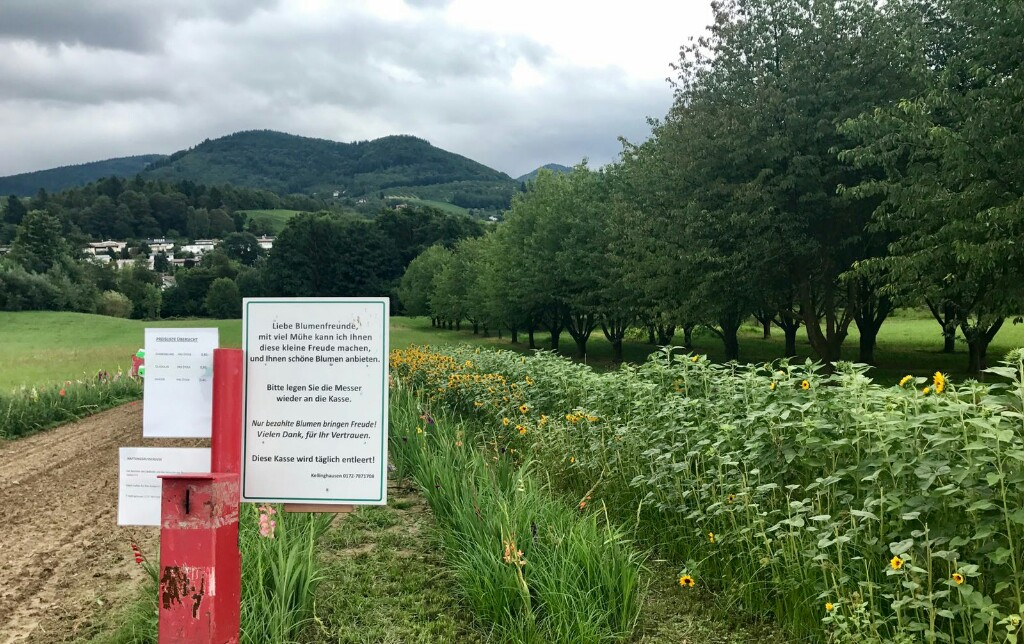 flower field and red honesty box