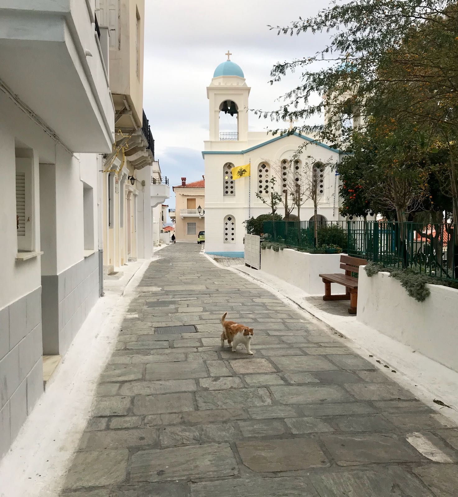 Path leading to a church in Chora with a ginger cat in shot