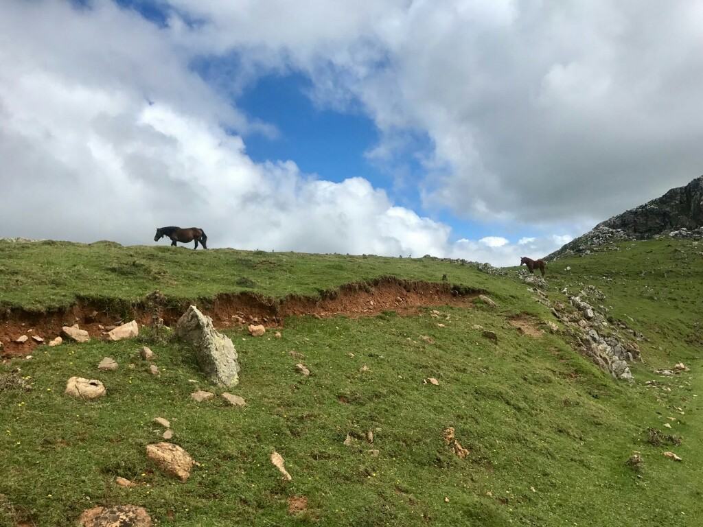 Horses wandering along the top of mountains