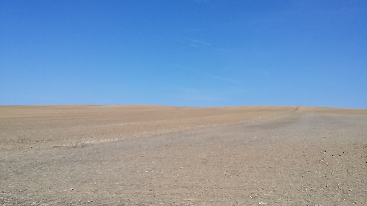 Photo from the Meseta split into two equal sections: deep blue sky and warm yellow field