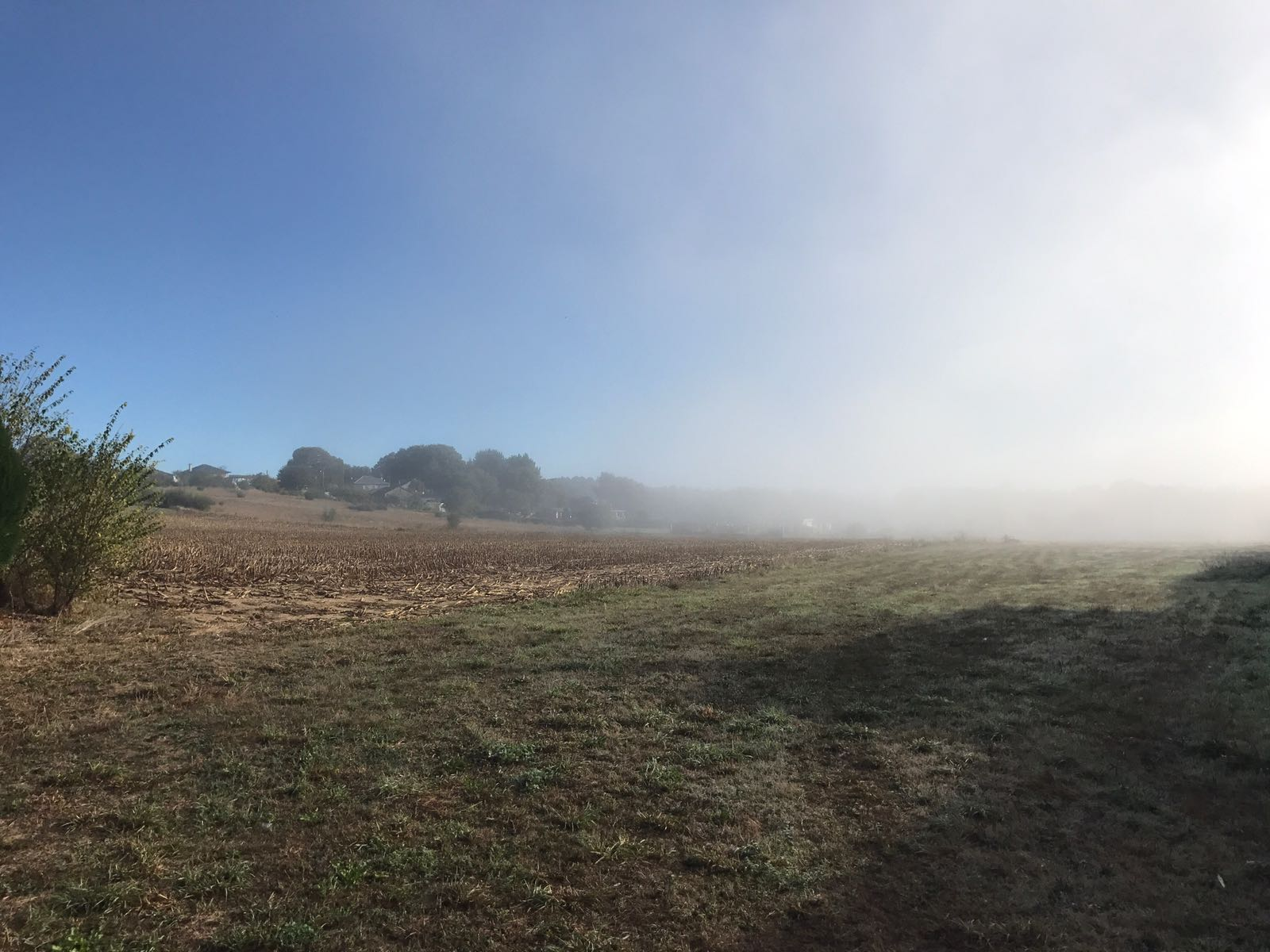 A field half in the sunshine and half covered in mist