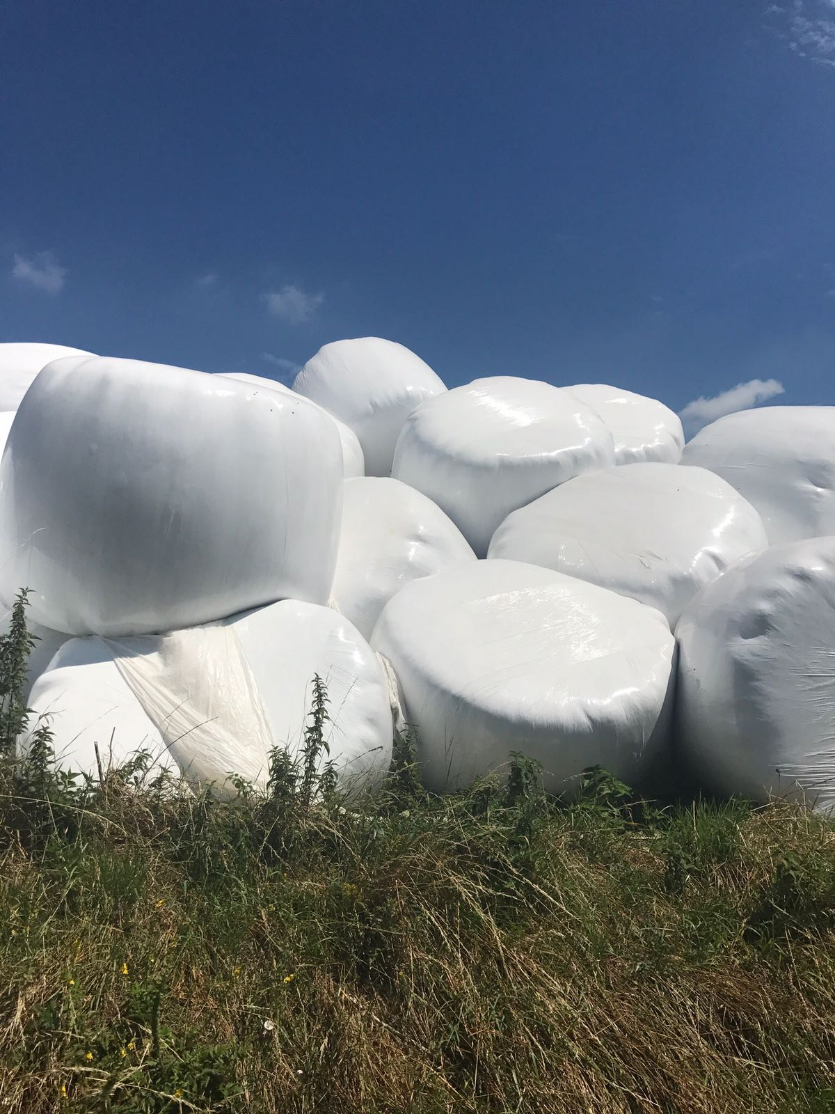 Piles of hay bales wrapped in white plastic. Grass below. Blue sky above.