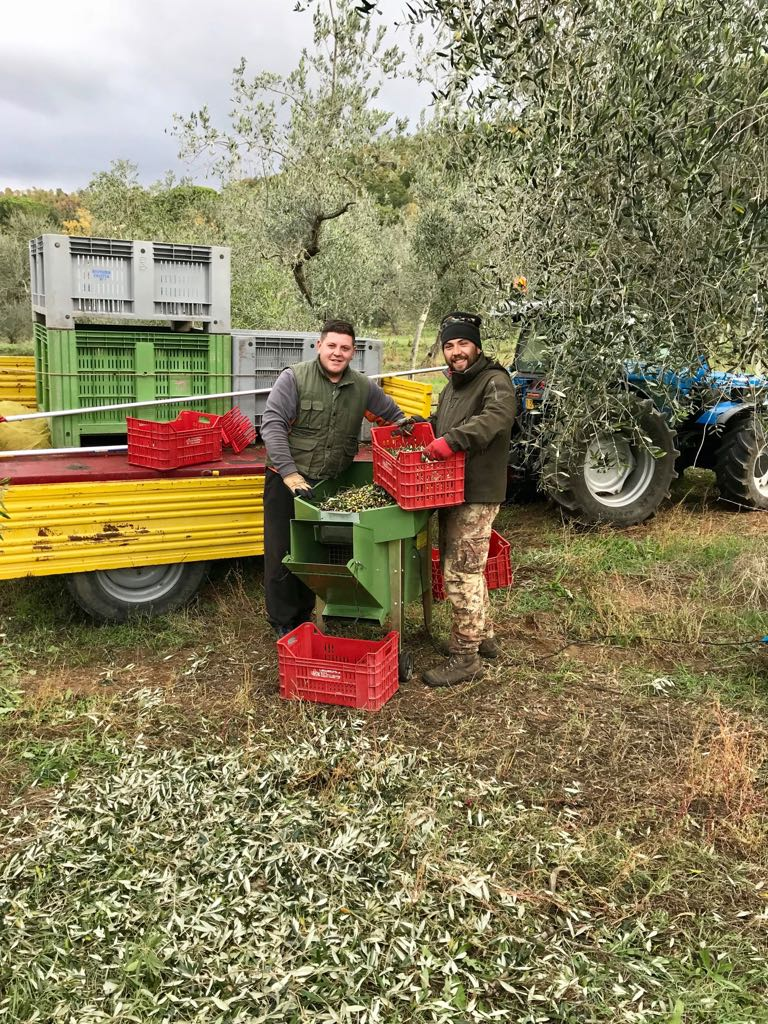Two olive pickers posing with crates of olives and a machine which separates the olives from any bits of tree