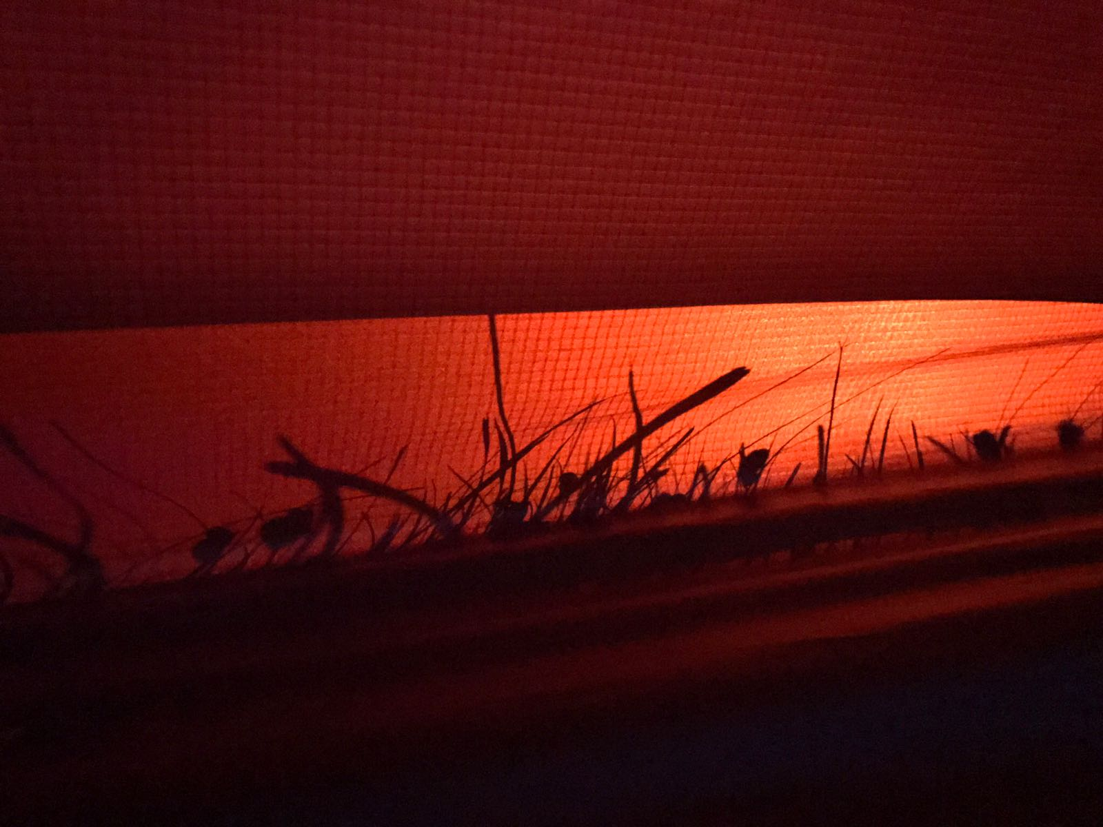 Silhouette of grass through a red tent