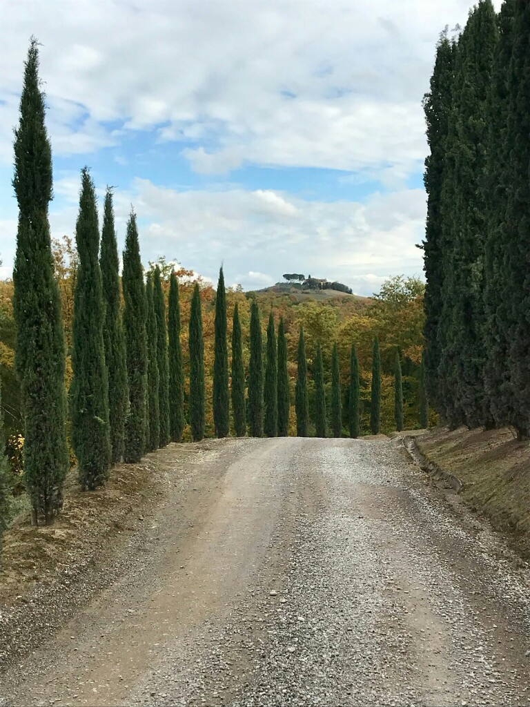End of a path lined with cypress trees