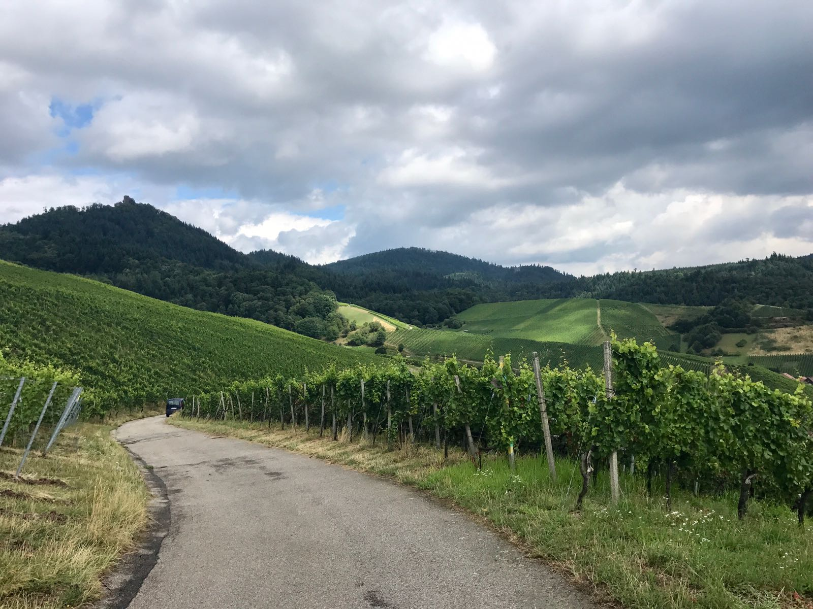 Path between vineyards on the Ortenauer wine route with the Black Forest in the background