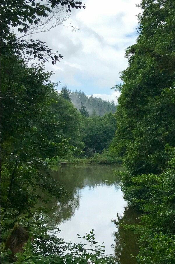 Pond on walk from Baden Baden