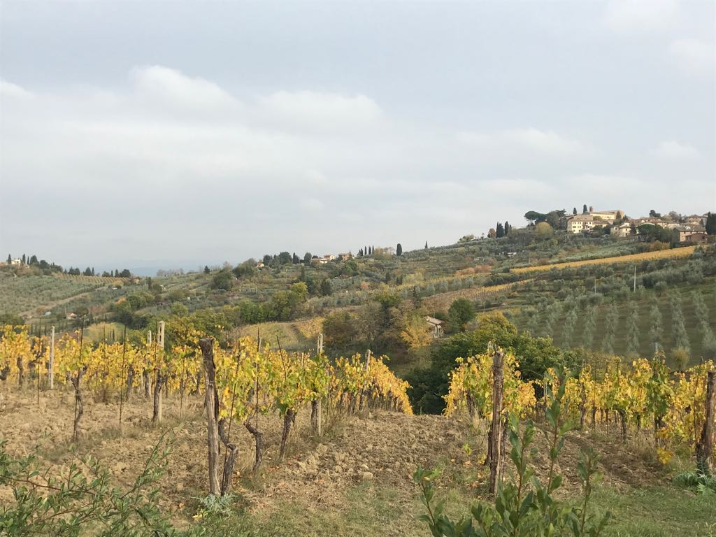 San Gimignano from a distance in the sun, with vineyards in the foreground