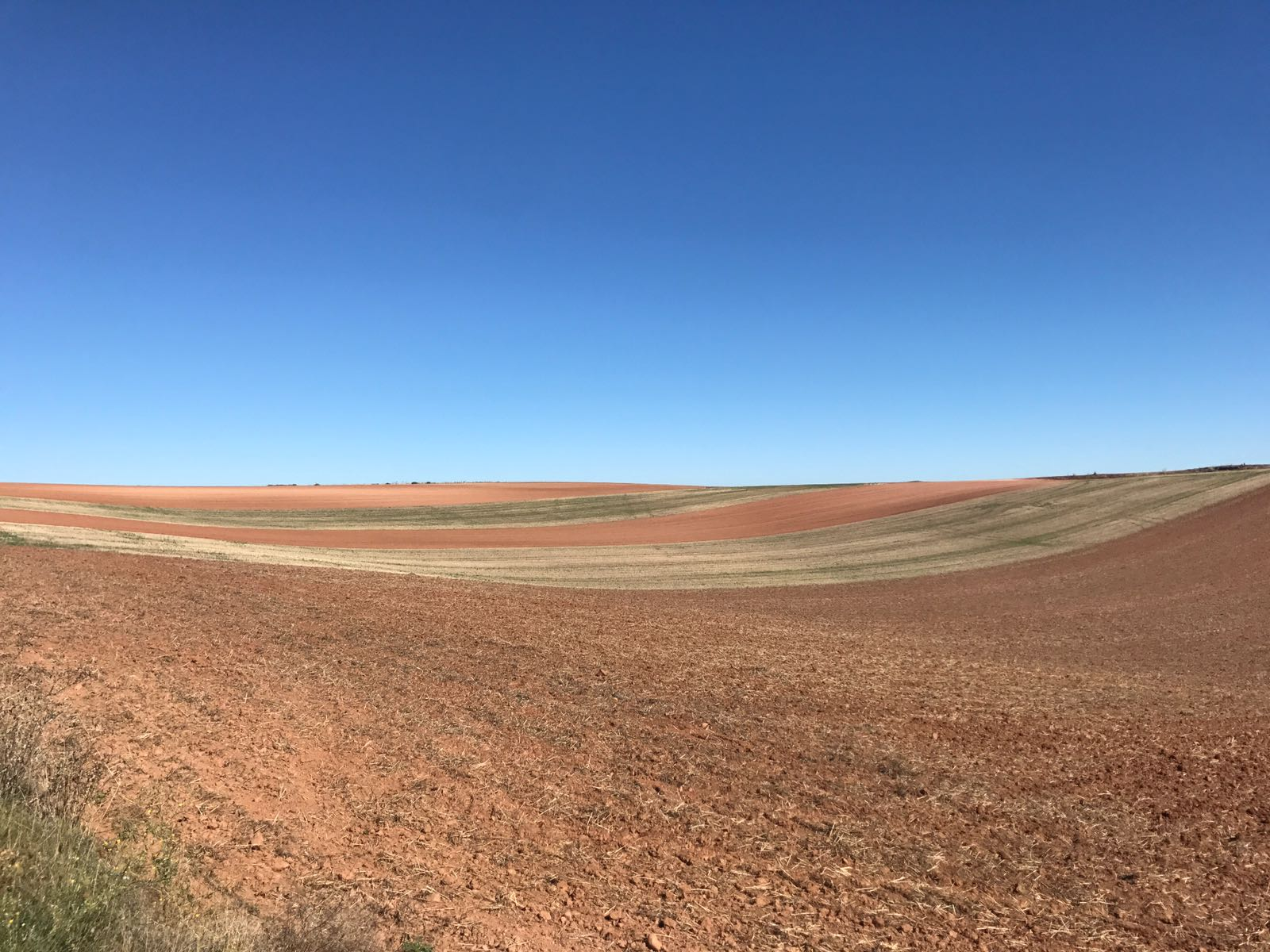 Fields near Santo Domingo forming stripey patterns
