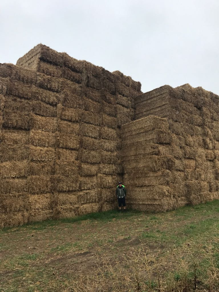 Tom in the corner of a giant haystack