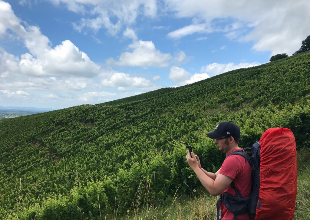 Tom taking a photo amongst the vineyards