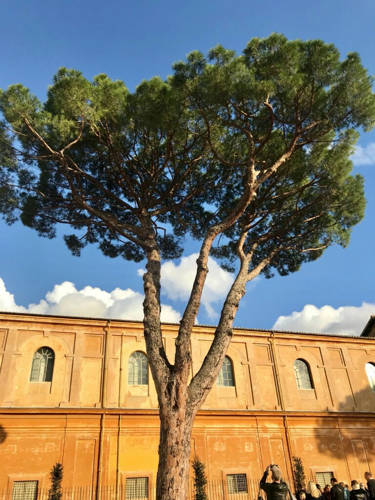 Tree from a terrace overlooking the gardens in the Vatican